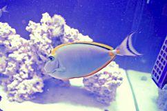 Saltwater Living Reef Aquarium by The Reef Doctor
